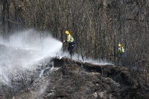 Firefighters dampen down the blaze on Walter's Bluff. Photo: Evan Barnes